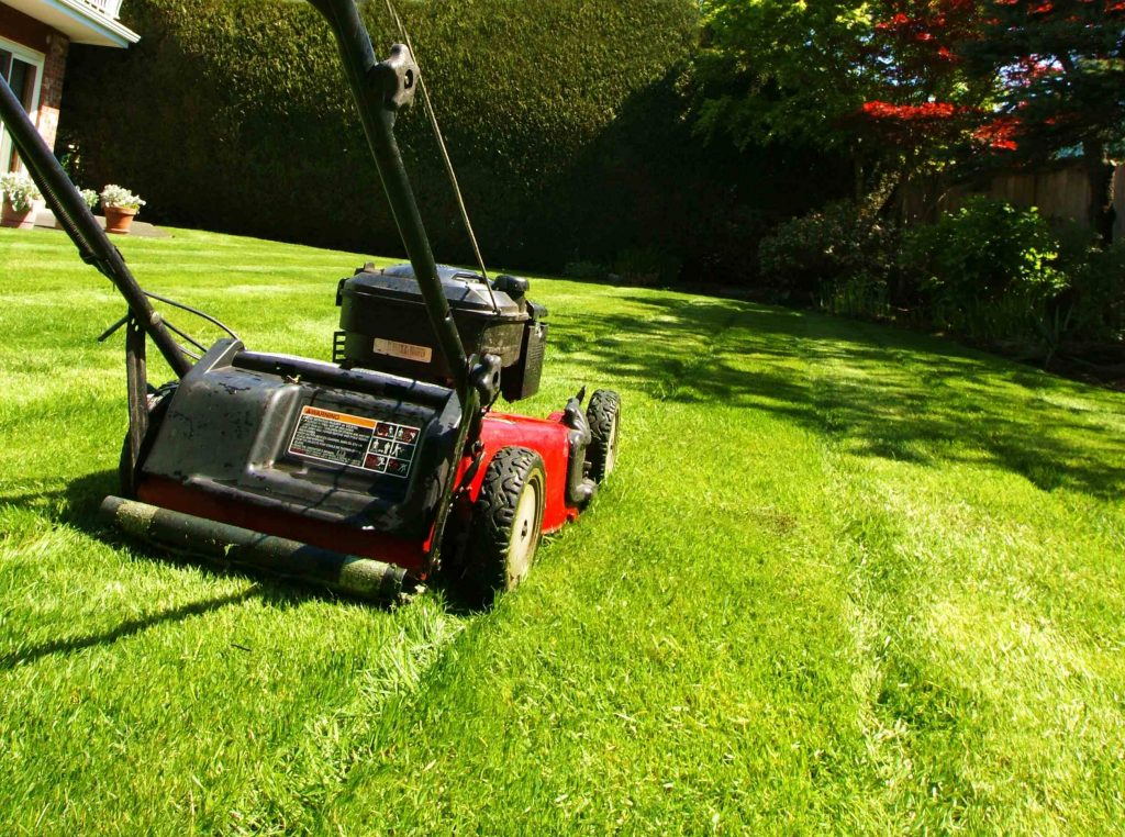 Lawn Care Vs. Landscaping